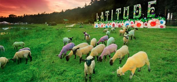 latitude festival dyed painted sheep | Latitude Festival 2012